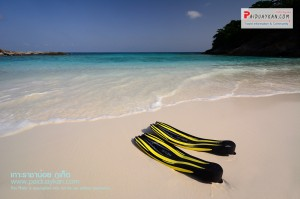 <b>ล่องเรือชมปลาโลมา เที่ยวเกาะราชาน้อย</b>