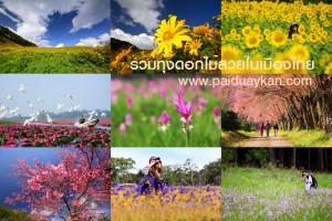 <b>รวมเส้นทางสายดอกไม้สวยในเมืองไทย</b>