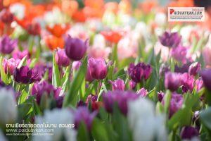 <b>งานเชียงรายดอกไม้งามและดนตรีในสวน ครั้งที่ 13</b>