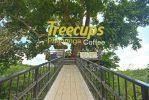 Tree Cups Phangnga Coffee ร้านกาแฟบนต้นไม้ พังงา
