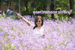 ทุ่งดอกหงอนนาค ปราจีนบุรี