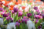 งานเชียงรายดอกไม้งามและดนตรีในสวน ครั้งที่ 13