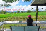 Romance Farm ปาย