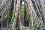 เที่ยวอุโมงค์ปิยะมิตร ชมต้นไม้พันปี