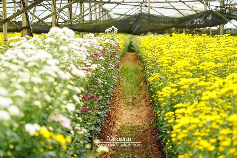 สวนไม้ดอกเมืองหนาวเบตง